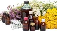 כשרוב האנשים שומעים על אלתיאה, הידועה גם כמרשמלו, הם חושבים על פינוק מזון רך, לבן הנפוץ לקליה במדורות. יחד עם זאת, זהו גם סוג של צמח אפריקאי בעל פרחים קטנים, […]